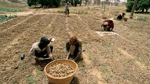 Analysis: Mali's Aid Problem--Mali remains underdeveloped despite foreign aid inflows. (IRIN, 5 Aug. 2013)