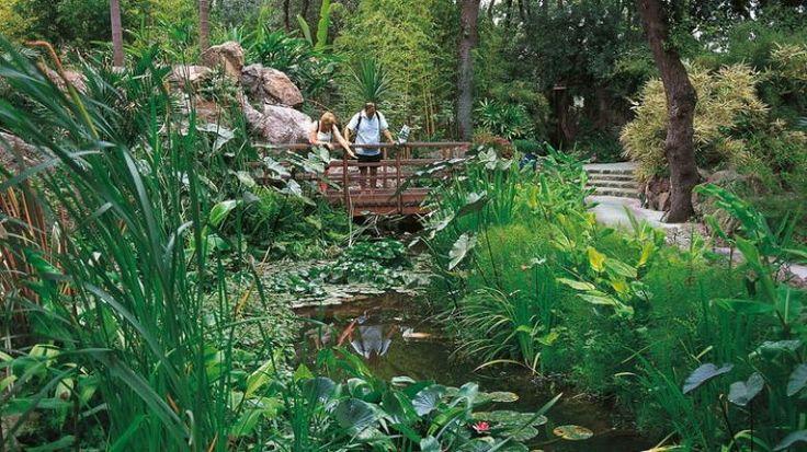 La Mortella Garten   Ischia: Insel der heißen Quellen im Golf von Neapel - Bilder & Fotos ...