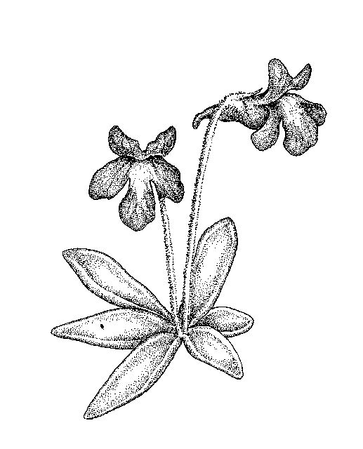 Plant Ovaries