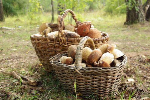 Co s houbami?