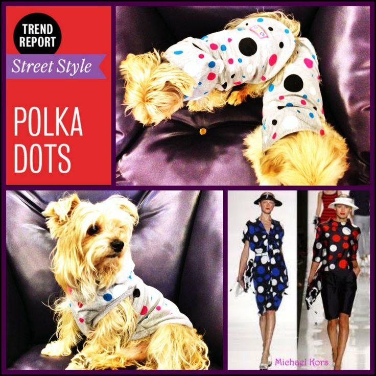 Moda Köpek Kıyafetleri Köpek Modası Köpek Modası Köpek Giysileri Köpekler Dod Clothes Pet Clothes yorkie pekingese polka dots puantiye www.kemique.com