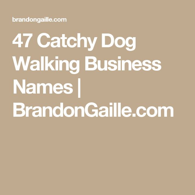 47 Catchy Dog Walking Business Names