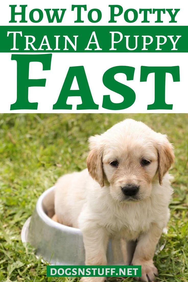 how to train a golden retriever dog