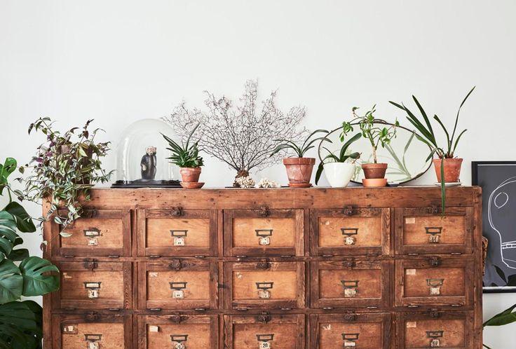 Muebles antiguos y plantas forman una combinación ganadora