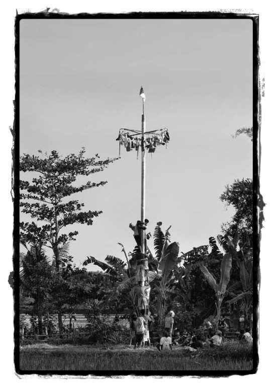 Cimb up areca tree..we called Panjat Pinang..