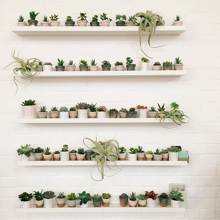 """Happy Monday Bettettes! Here's a snap from the weekend, we'd love this many cacti and succulents in our house please @geo_fleur  #indoorjungle"""