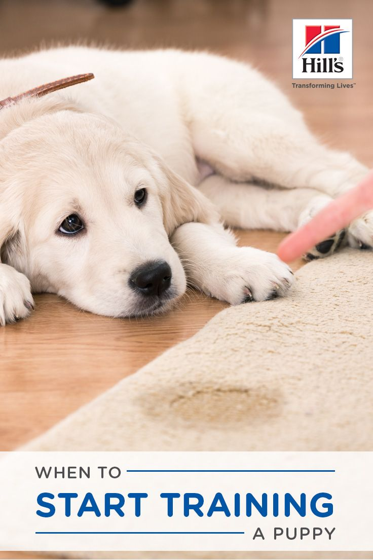 When Should I Start Training My Puppy Or Kitten Puppies Dogs