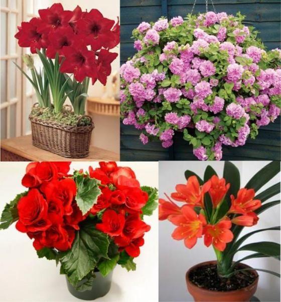 Растения любящие тень
