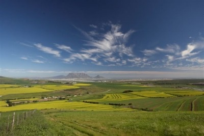 Wonder of Nature! Nestled between the hills of Durbanville is this farm of 183ha with endless possibilities. +-80ha irragation allowance for vines, currently planted with wheat or canola. There is 33 000 lavender x intermedia abrialii in third year of production. Stunning views over Cape Town and Table Mountain.#Durbanville #iLoveDurbanville
