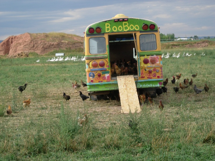 All Aboard! #chickens #coops