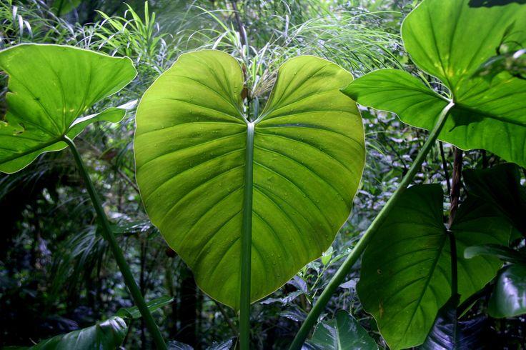 Im Nationalpark Monteverde. Noch nie ein so saftiges Grün gesehen...
