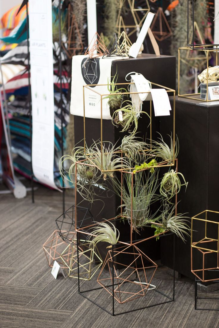 Our stand at Kamers Market.  Metal cubes with an array of different varietals air plants.  #tillandsia #airplants #metalcubes #decor #elsjedesigns