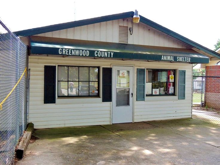 7/6/17 An animal shelter in Greenwood, South Carolina, is so full that they are temporarily holding dogs in the facility's kitchen, bathroom, storage room and even on the sidewalk. The situation is so bad that the Humane Society of Greenwood, which manages the Greenwood County Animal Shelter, pleaded with area residents to think twice before considering …