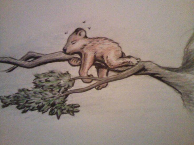 Bear on branch