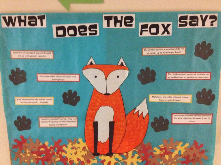 """What Does the Fox Say?"" bulletin board with facts about foxes."