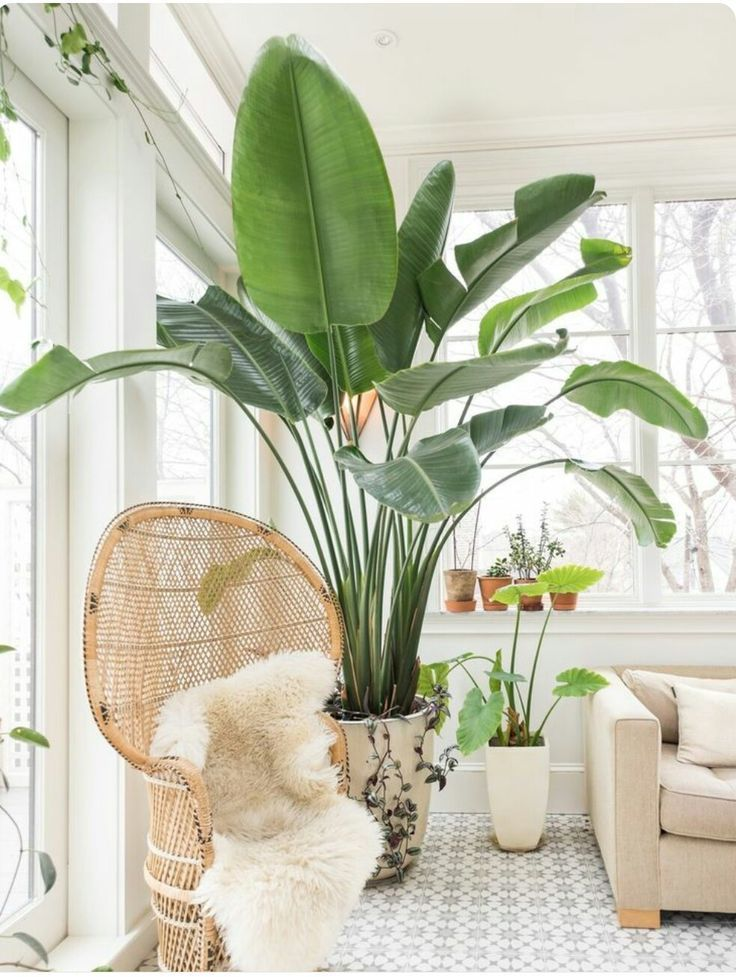 25 best ideas about large indoor plants on pinterest for Low maintenance indoor plants
