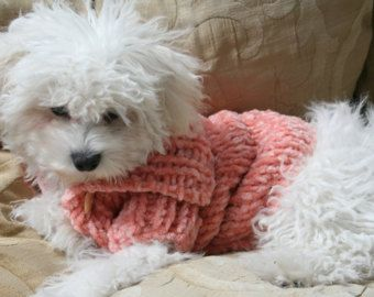 Fisherman's Dog Sweater For Annabelle and Knitted Dog