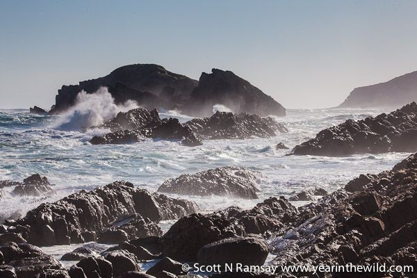 The shoreline of Robberg is mostly rocky, with only two beaches...the surrounding marine protected area is important for conservation of spe...