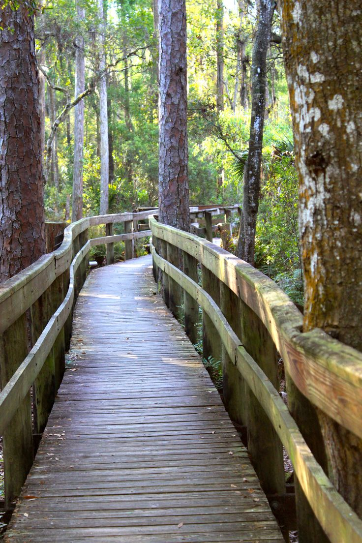 Brooker Creek Preserve, Tarpon Springs