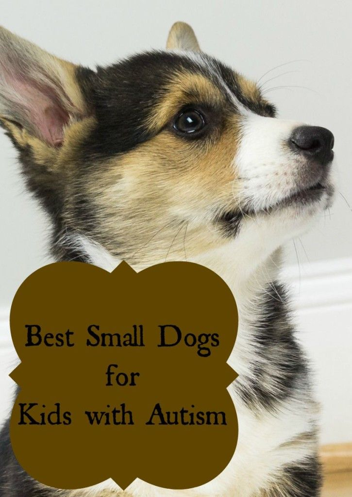 Best Small Dogs for Kids with Autism. Featured by Special Learning House. www.speciallearninghouse.com