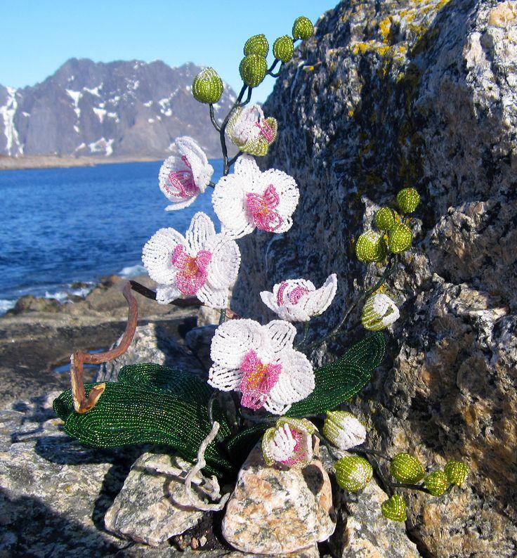 """Цветы из бисера. Орхидея""""Нежность"""" на берегу Норвежского фьорда.Фото оригинал."""
