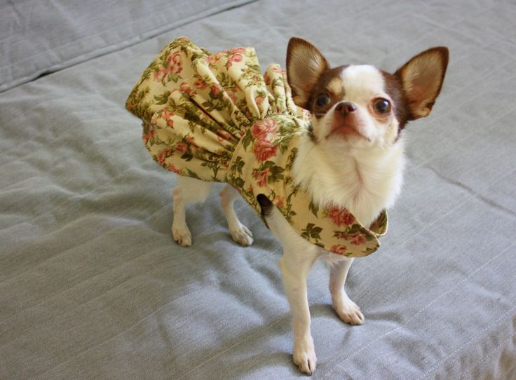 chihuahua, chihuahua lovers, teacup dogs, funny dogs, small dogs, dog clothes, chihuahua clothes, chihuahua dress, dog dress, dog clothes etsy