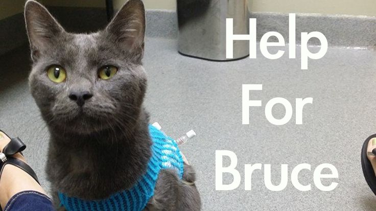 "Bruce needs your help to fight off his life threatening health issues. And what better way to get to know Bruce than through his ""Fancy"" music video? Trick question. There is no better way. Please take a look, share his story and please donate if you are able. This sweet little boy needs all the help he can get and you couldn't come across a cat who is more deserving."