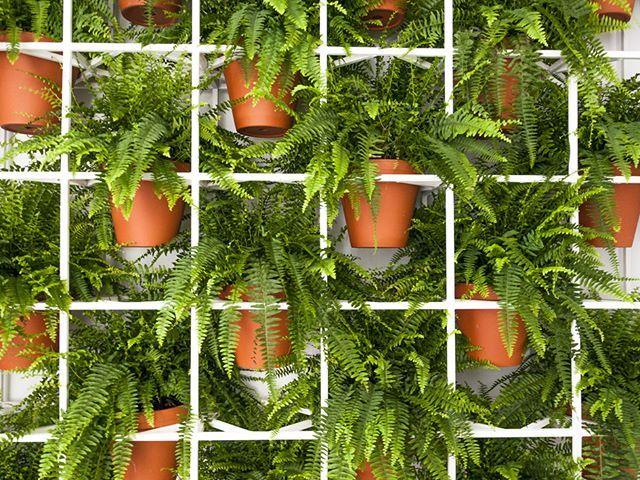 Deze 10 planten zorgen voor extra zuurstof én zuiveren de lucht — Avalon Botanique