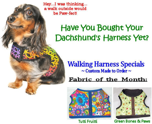 Monthly Special Taylor Made Walking Dachshund Harness