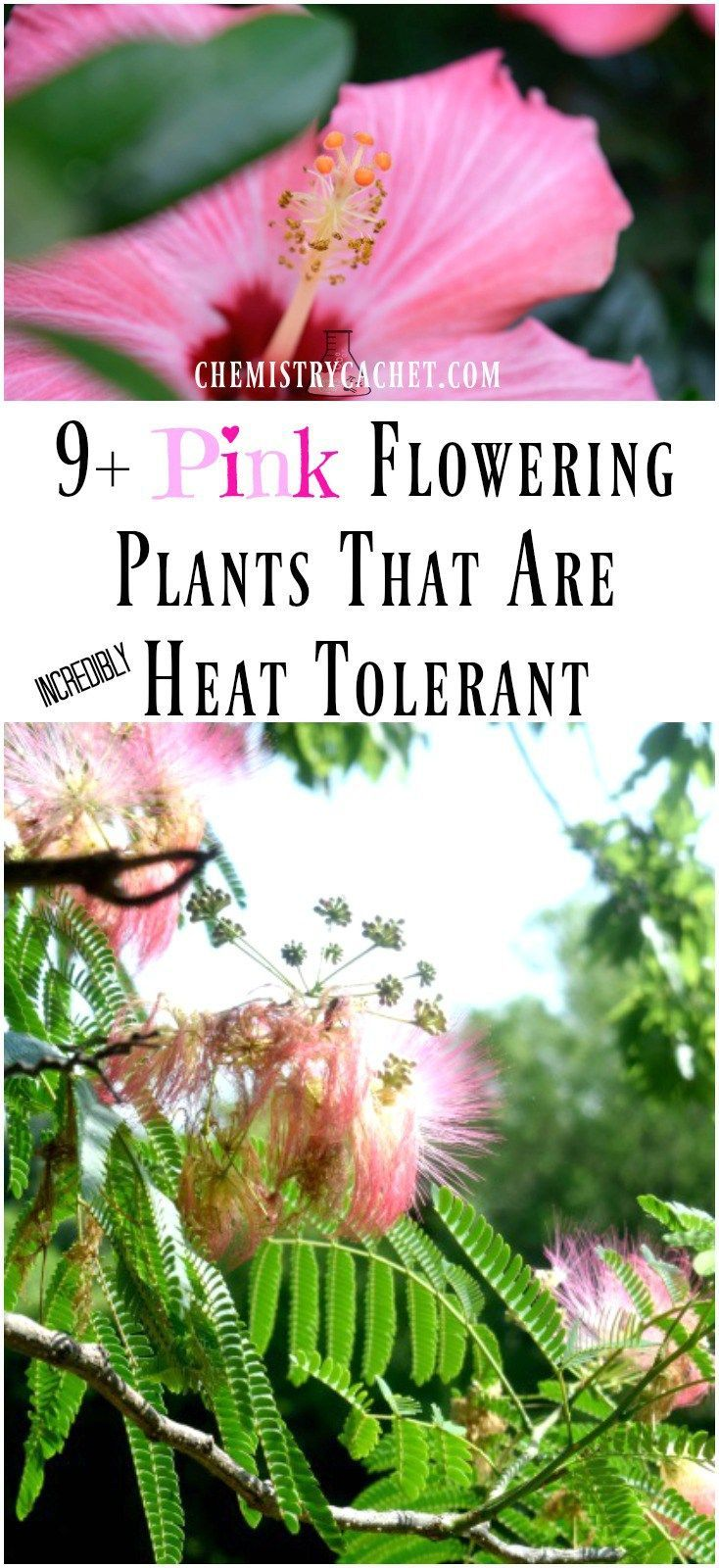 1000 images about gardening with a black thumb on pinterest gardens raised beds and planters - Heat tolerant plants keeping gardens alive ...