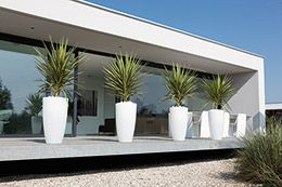 White pots will transform your garden into a contemporary space, these ones from Next look stunning!