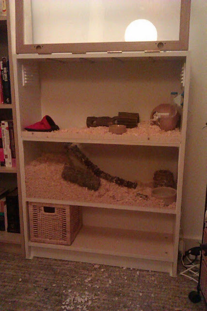 hamster cage from Ikea billy bookcase! would be cool for gerbils too