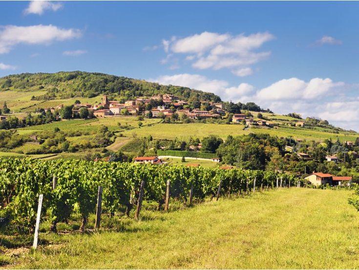 Le Mont Brouilly et les vignes du Beaujolais