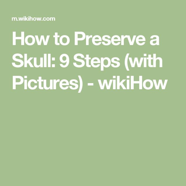 How to Preserve a Skull: 9 Steps (with Pictures) - wikiHow