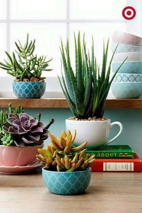 Garden in a cup~