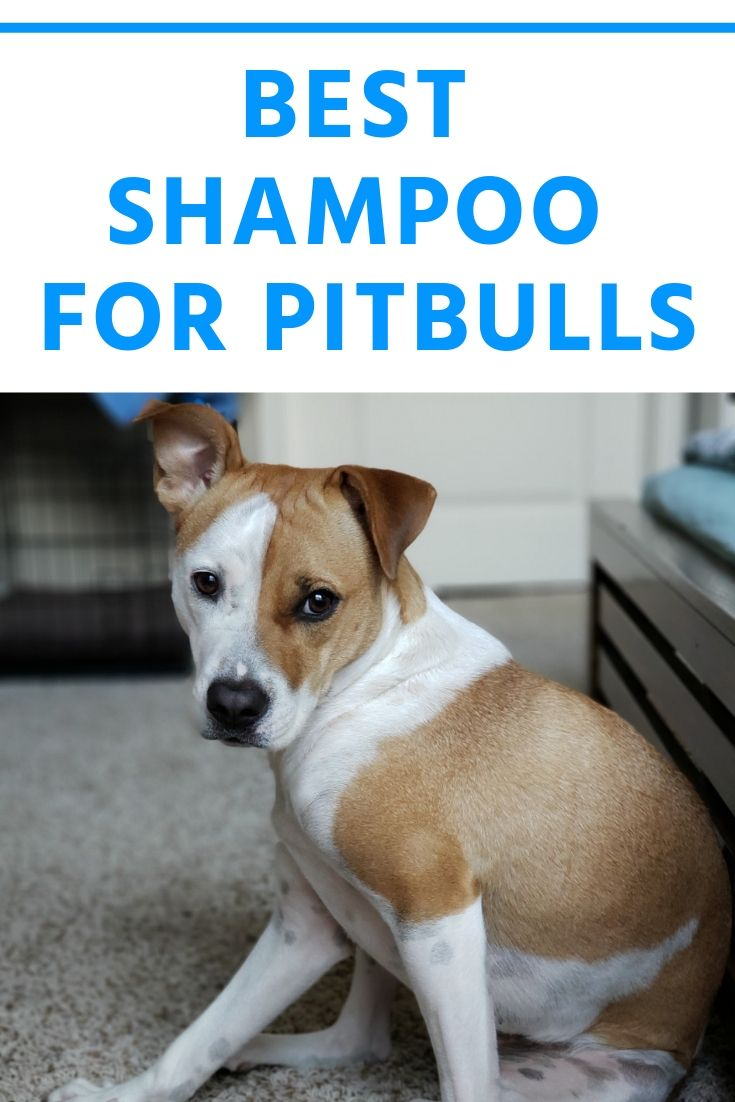 Here Is The Best Shampoo For Pitbulls Doglist Dogs Dogshampoo