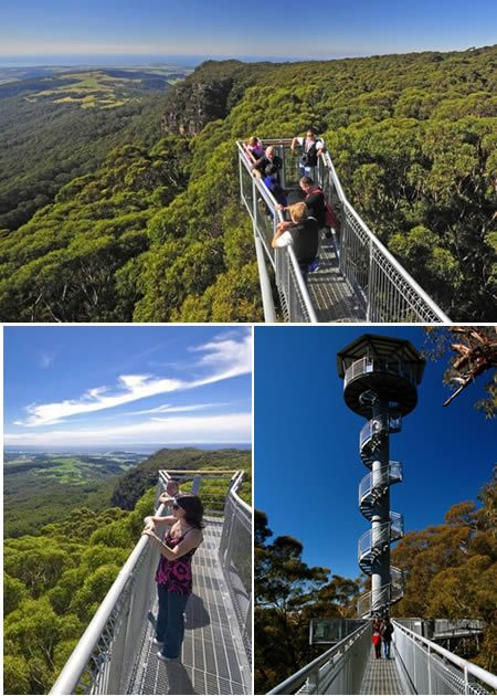 Located at Knights Hill up high on the escarpment near Robertson in the Southern Highlands, Australia,  the Illawarra Fly Tree Top Walk allows visitors to walk among the rainforest canopy 25 metres above the ground on a steel platform. - http://www.oddee.com/item_96703.aspx