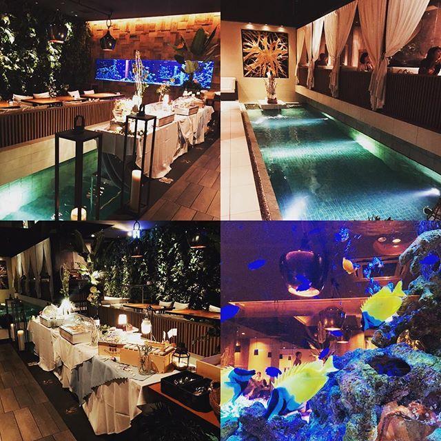 【inono518】さんのInstagramをピンしています。 《昨日の夜ご飯は凄かった🐠  #梅田 #umeda #osaka #堂島 #北新地 #曽根崎 #dinner #hotel  #エスニック料理  #yummy #dericious #アクアリウム  #熱帯魚 #diningbar #restaurant #l4l》