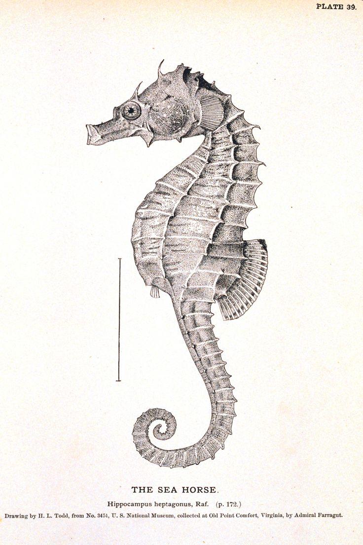 Animal - Curiosity - Seahorse