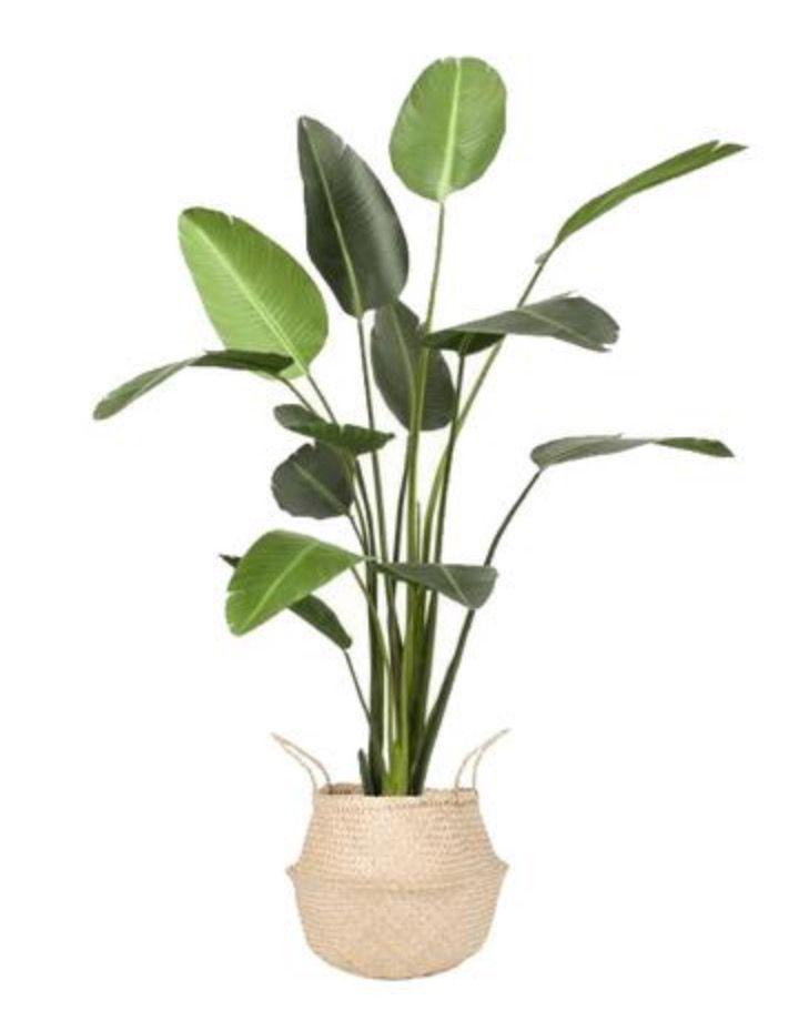 Large Artificial Strelitzia Plant 6ft Artificial Plants Artificial Plant Arrangements Small Artificial Plants