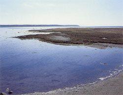 Strandenge. Atlanterhavs-strandeng (Glauco-Puccinellietalia maritimae)  Strandeng. Alrø, Horsens Fjord, Østjylland. Foto: Bert Wiklund. Foto: Bert Wiklund.  Strandenge omfatter plantesamfund, som jævnligt oversvømmes af havet, f. eks. ved vinterstorme. De har en vegetation af salttålende græsser og urter. Naturtypen omfatter mange undertyper, f.eks. strandsump. Naturtypen findes langs kyster, der er beskyttet mod væsentlig bølgepåvirkning og deraf følgende erosion.  Udbredelse. Strandenge…