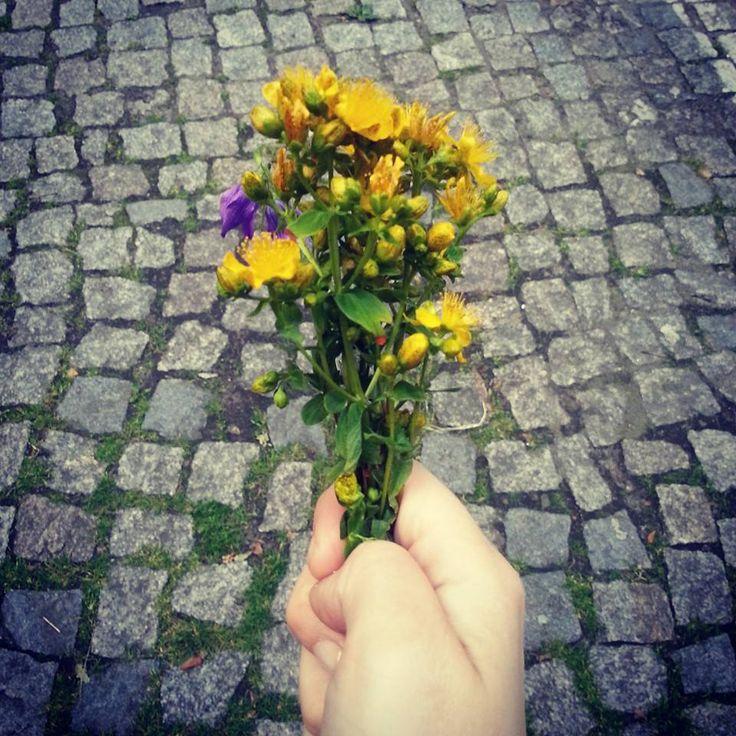 Kwiatki od @noisettee