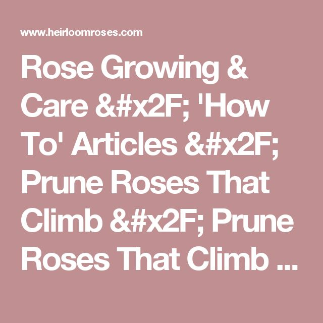 Rose Growing & Care / 'How To' Articles / Prune Roses That Climb / Prune Roses That Climb / Heirloom Roses - Heirloom Roses