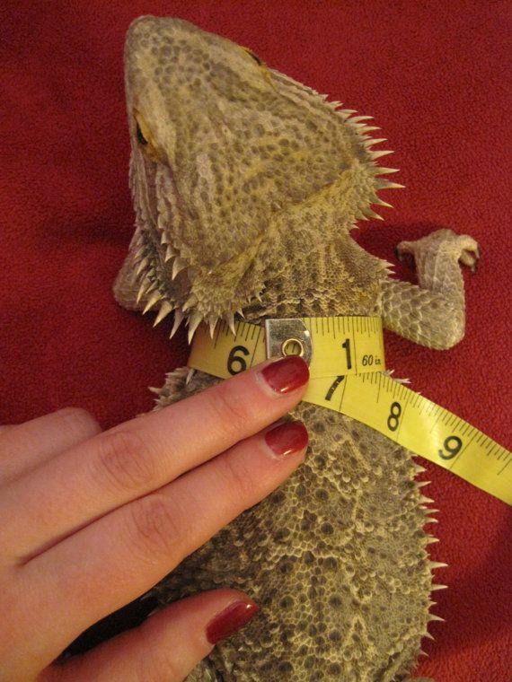 Small Lizard Leash/Reptile Harness Leopard Print