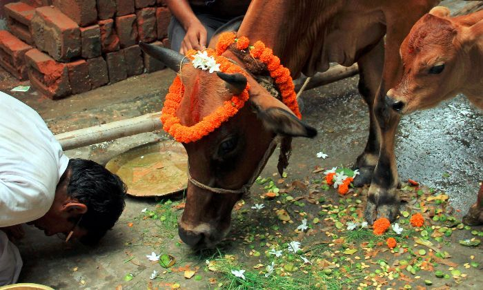 Nationwide cow slaughter ban plea rejected by SC!  https://themangonews.com/india/nationwide-cow-slaughter-ban-plea-rejected-sc/