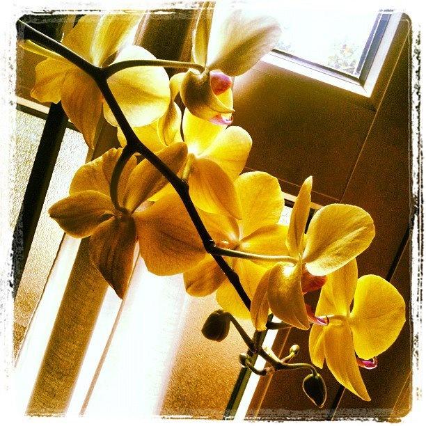 dietro l'orchidea