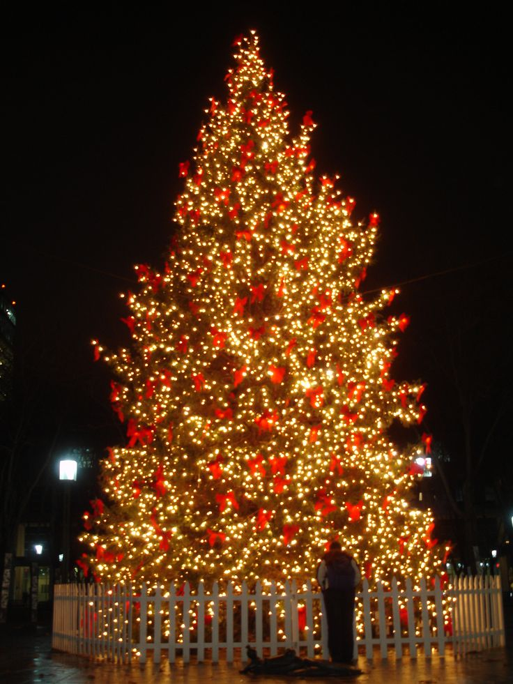 96 Best Images About Christmas Trees On Pinterest Trees