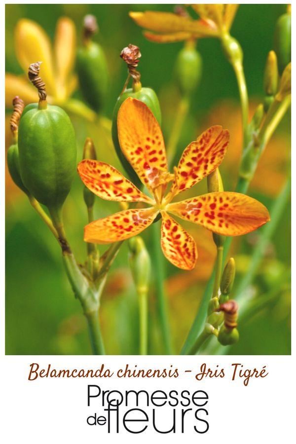 les 25 meilleures id es de la cat gorie orchid e rouge sur pinterest d coration de mariage. Black Bedroom Furniture Sets. Home Design Ideas