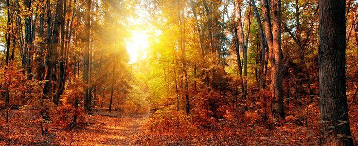 Фотография Осень Природа тропинка Леса Деревья Времена года Тропа осенние сезон года