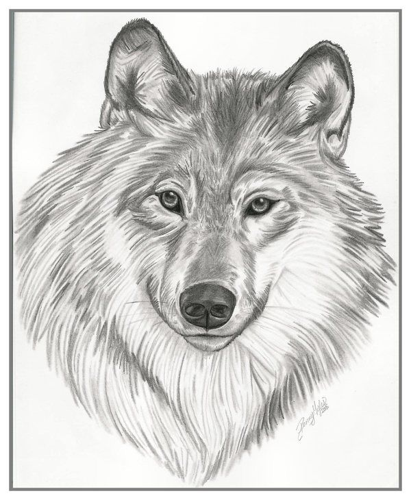 Drawings (Animals) on Behance | pics | Pinterest | Drawings